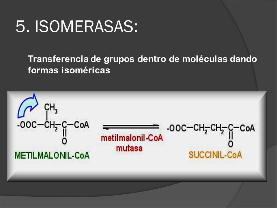 5. ISOMERASAS: Transferencia de grupos dentro de moléculas dando