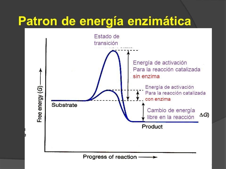 Patron de energía enzimática