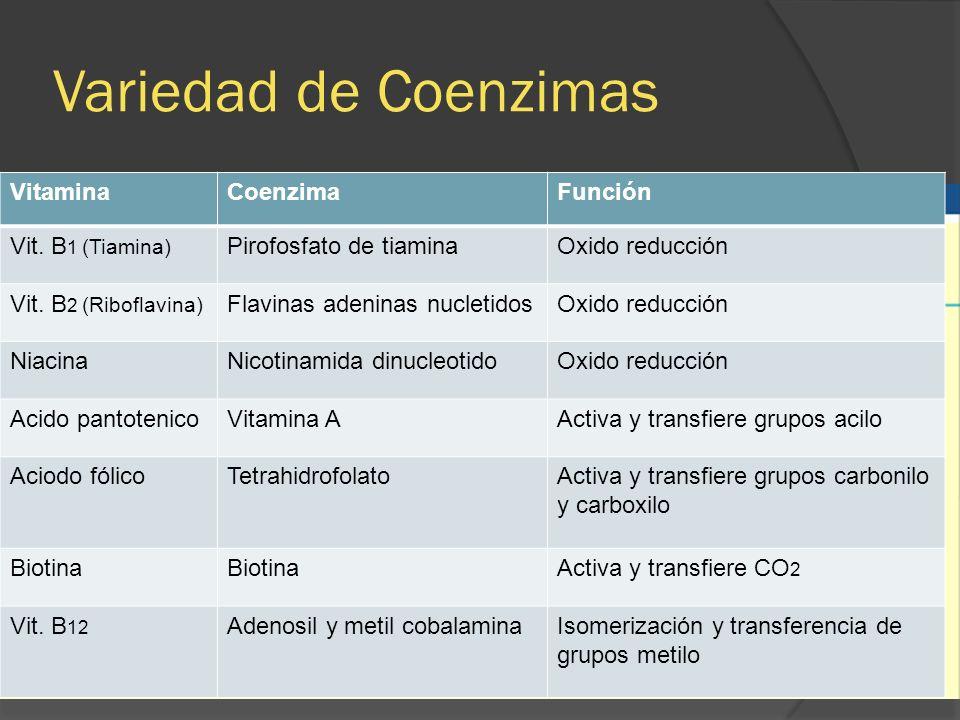 Variedad de Coenzimas Vitamina Coenzima Función Vit. B1 (Tiamina)