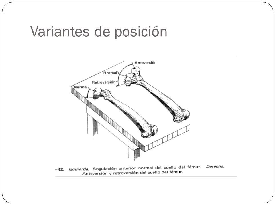 Variantes de posición La posición normal se logra cuando hay un ángulo normal del femur, los pies viendo a arriba