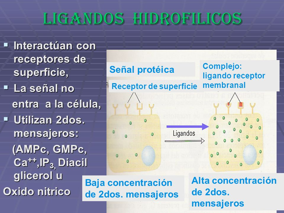 LIGANDOS HIDROFILICOS