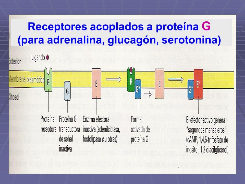 Receptores acoplados a proteína G