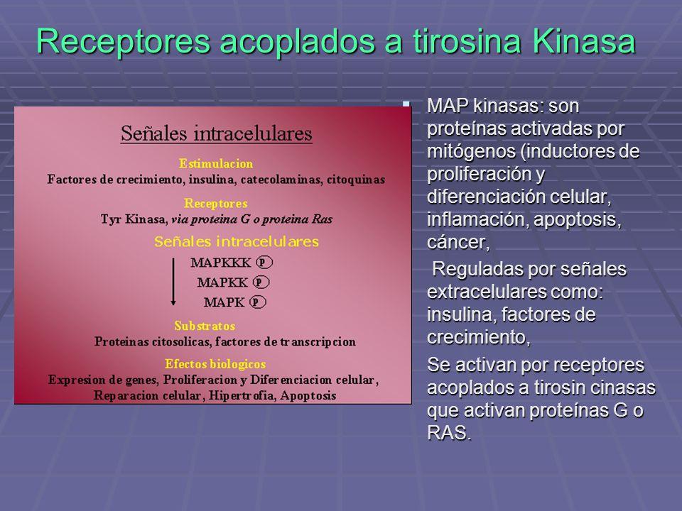 Receptores acoplados a tirosina Kinasa