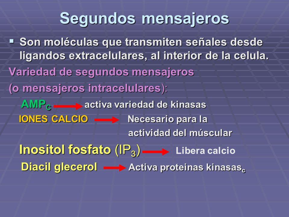 Segundos mensajeros Son moléculas que transmiten señales desde ligandos extracelulares, al interior de la celula.