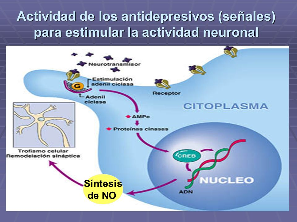 Actividad de los antidepresivos (señales) para estimular la actividad neuronal
