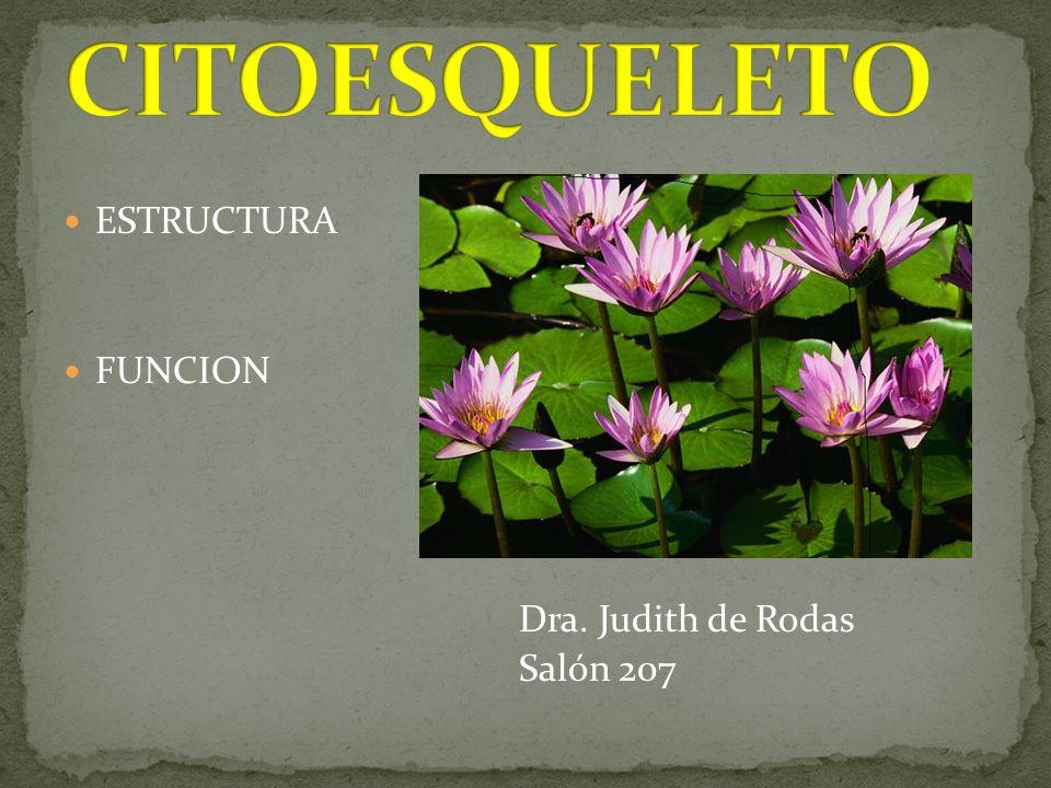 CITOESQUELETO ESTRUCTURA FUNCION Dra. Judith de Rodas Salón 207
