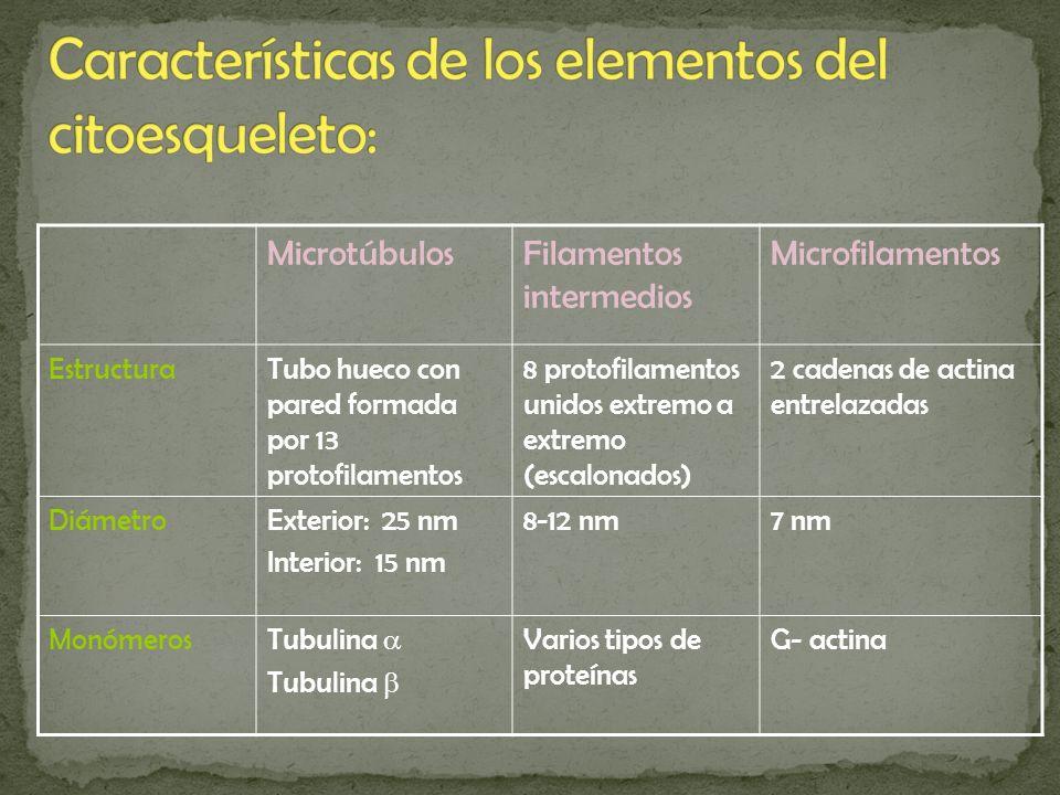 Características de los elementos del citoesqueleto: