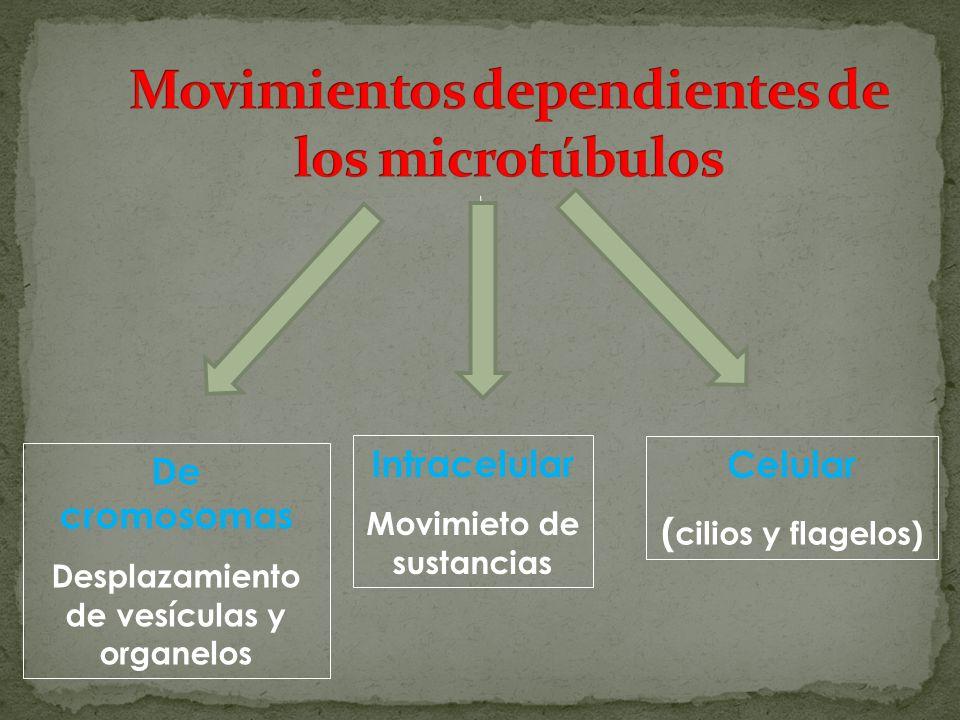 Movimientos dependientes de los microtúbulos