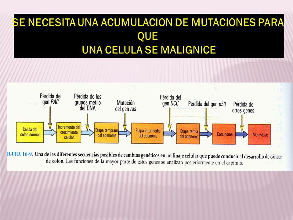SE NECESITA UNA ACUMULACION DE MUTACIONES PARA UNA CELULA SE MALIGNICE