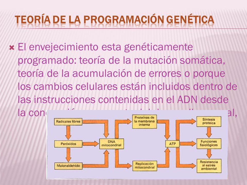Teoría de la programación genética