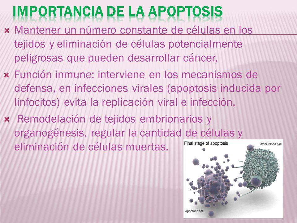 Importancia de la apoptosis