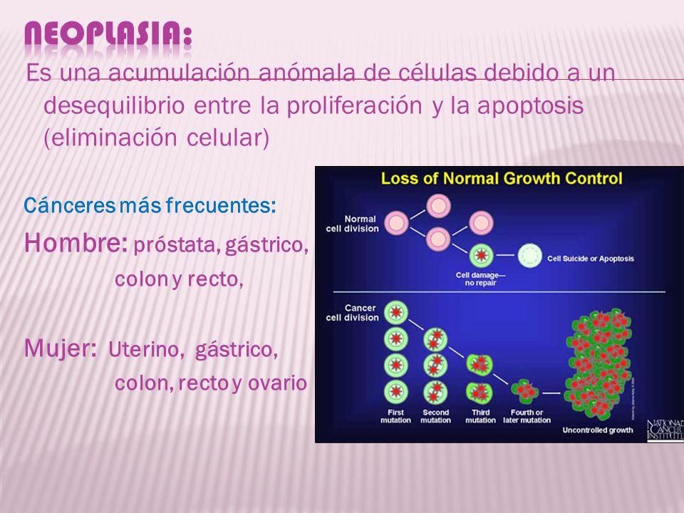 NEOPLASIA: Es una acumulación anómala de células debido a un desequilibrio entre la proliferación y la apoptosis (eliminación celular)