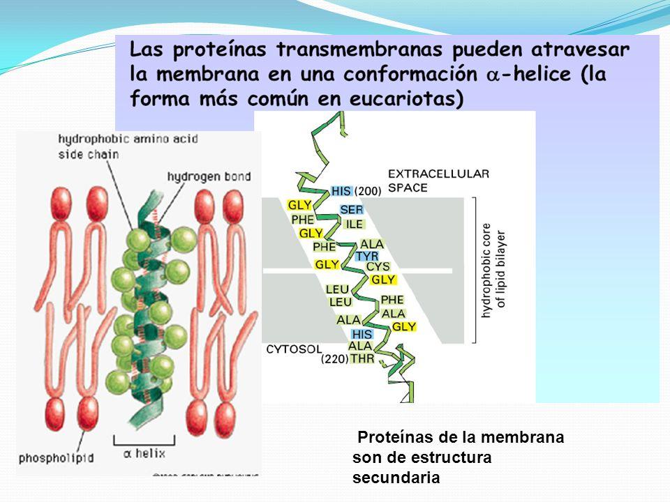 Proteínas de la membrana son de estructura secundaria