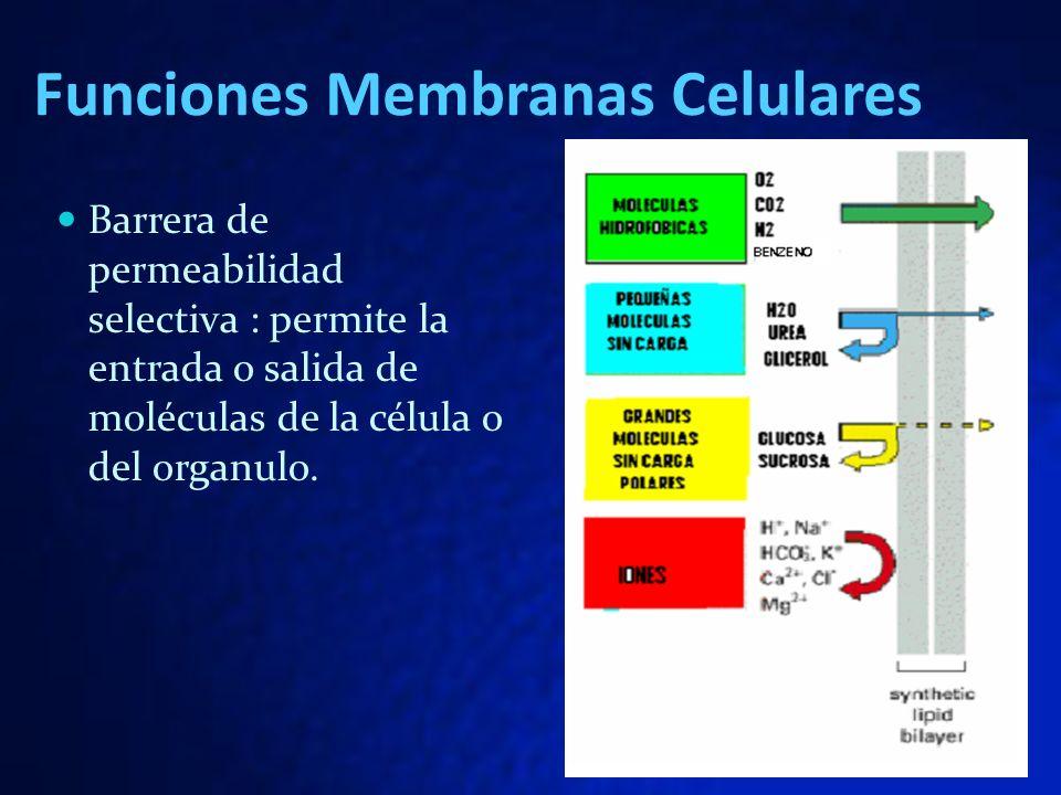 Funciones Membranas Celulares