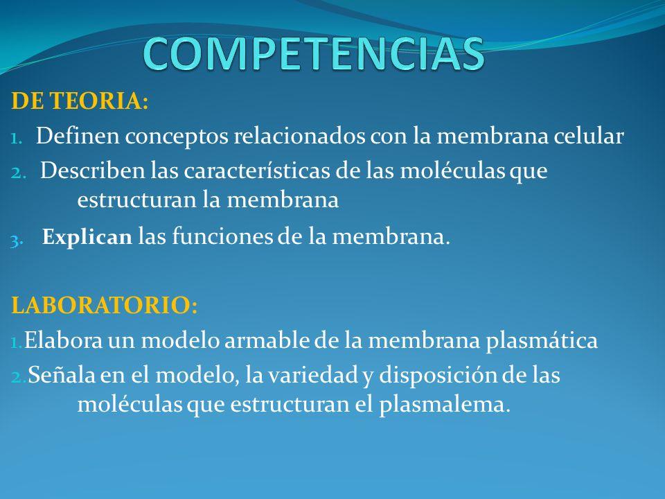 COMPETENCIAS DE TEORIA:
