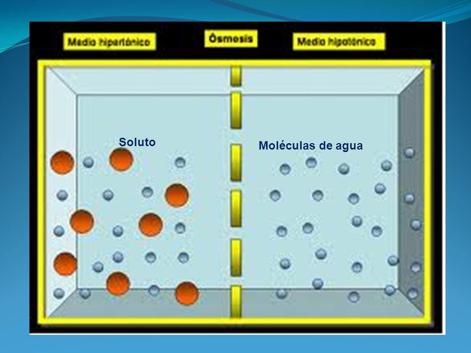 Soluto Moléculas de agua