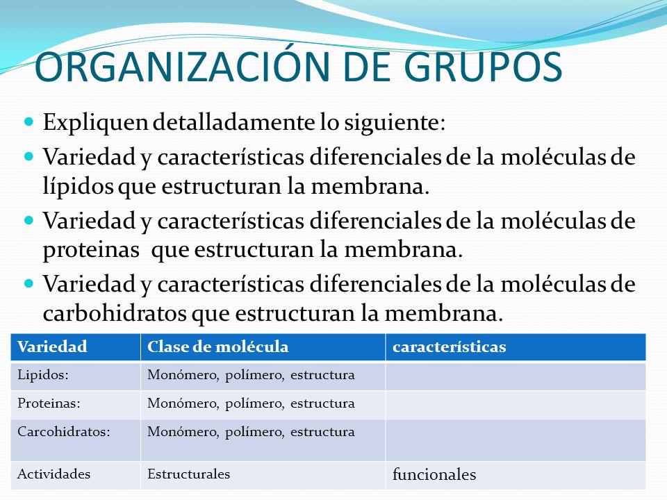 ORGANIZACIÓN DE GRUPOS