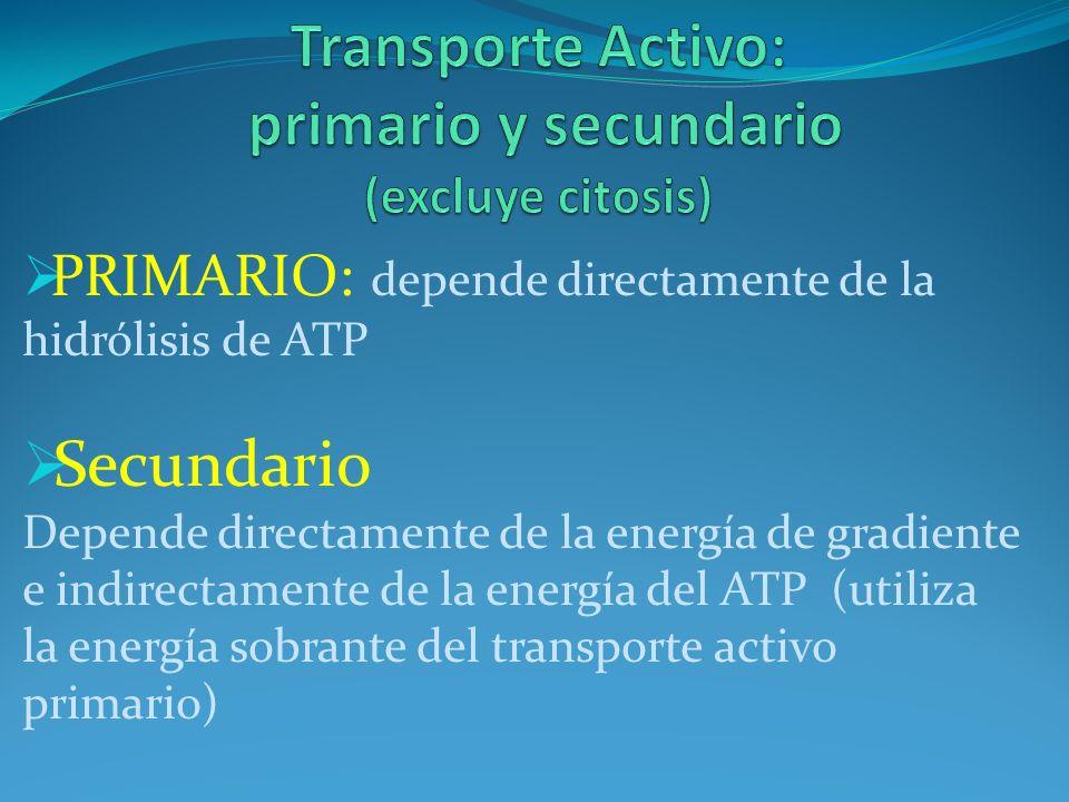 Transporte Activo: primario y secundario (excluye citosis)