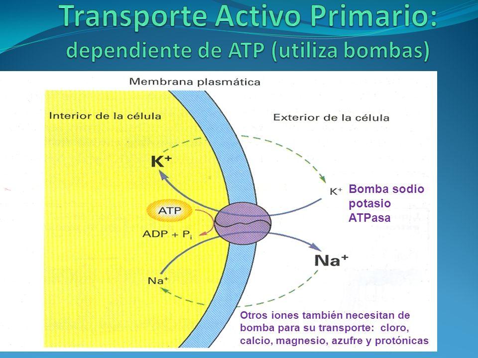Transporte Activo Primario: dependiente de ATP (utiliza bombas)