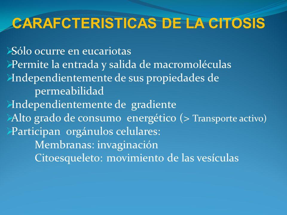 CARAFCTERISTICAS DE LA CITOSIS