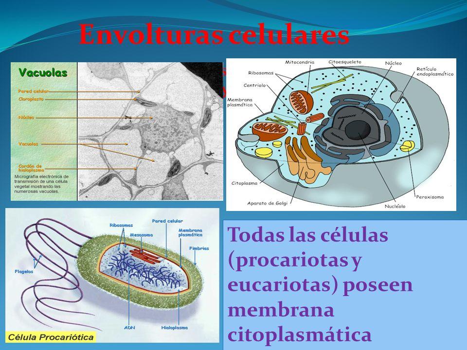 Envolturas celularesTodas las células procariotas y eucariotas, poseen Todas las células procariotas y eucariotas, poseen membrana plasmática.