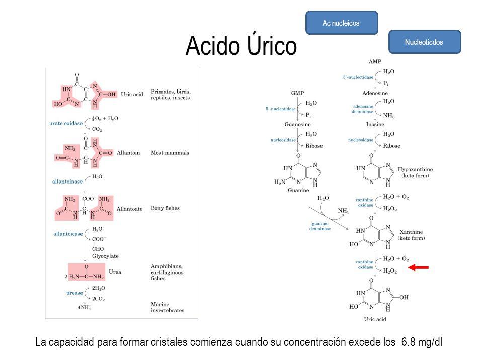 Ac nucleicos Acido Úrico. Nucleoticdos.