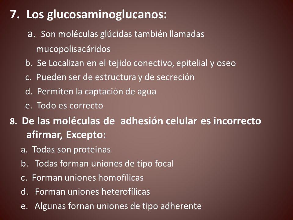 Los glucosaminoglucanos: a. Son moléculas glúcidas también llamadas