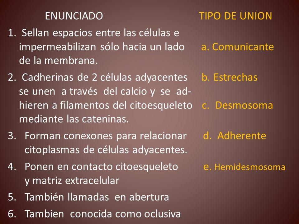 ENUNCIADO TIPO DE UNION
