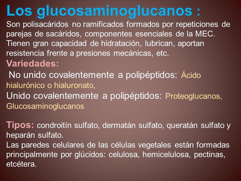 Los glucosaminoglucanos :