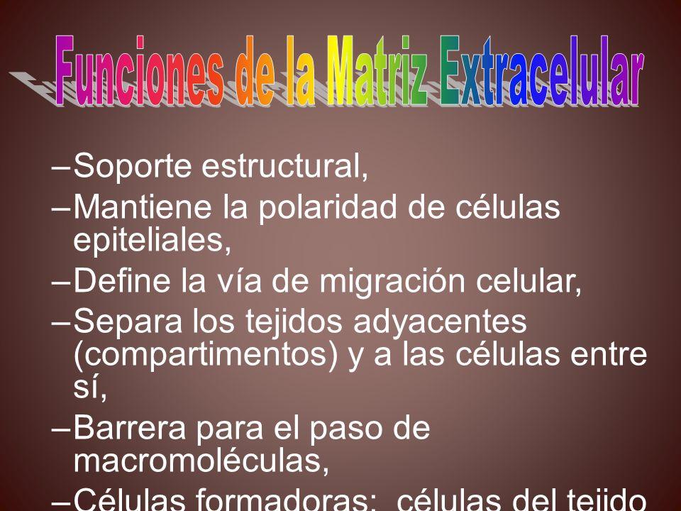 Funciones de la Matriz Extracelular