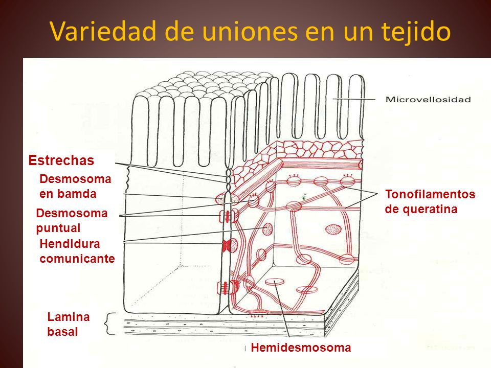 Variedad de uniones en un tejido