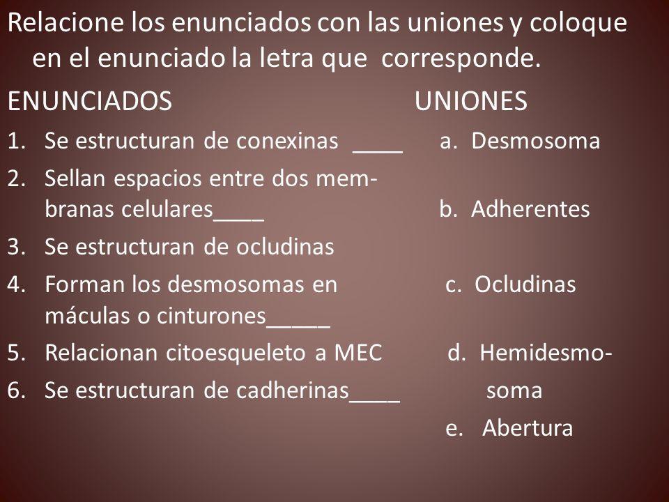 Relacione los enunciados con las uniones y coloque en el enunciado la letra que corresponde.