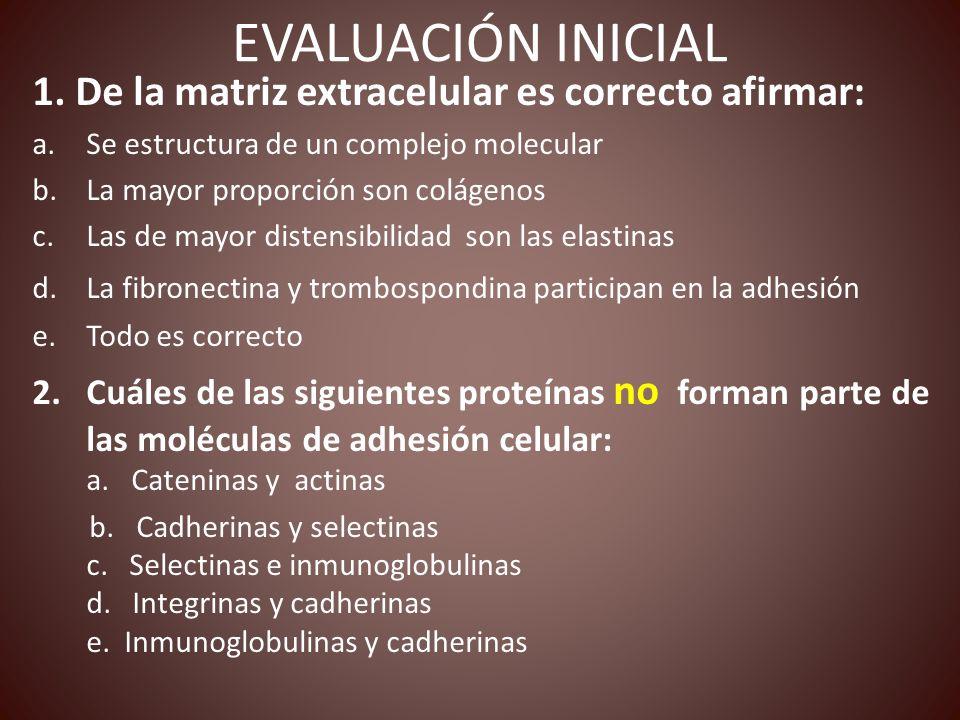 EVALUACIÓN INICIAL 1. De la matriz extracelular es correcto afirmar: