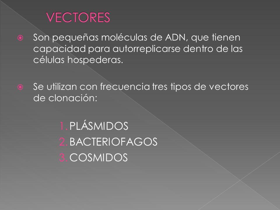 VECTORES PLÁSMIDOS BACTERIOFAGOS COSMIDOS