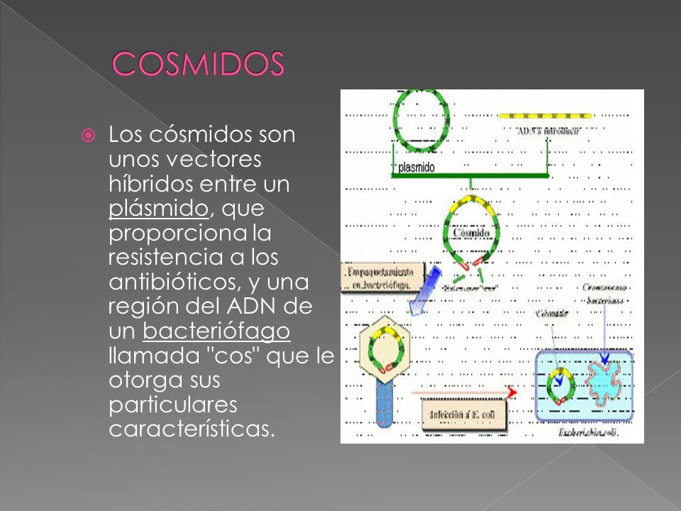 COSMIDOS