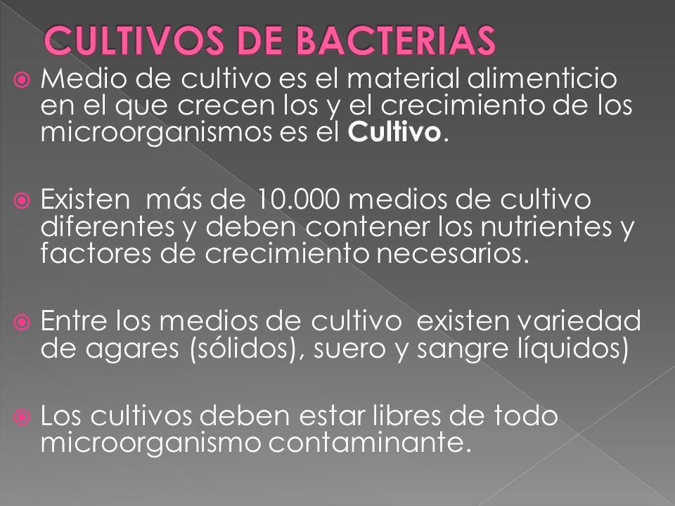 CULTIVOS DE BACTERIAS Medio de cultivo es el material alimenticio en el que crecen los y el crecimiento de los microorganismos es el Cultivo.