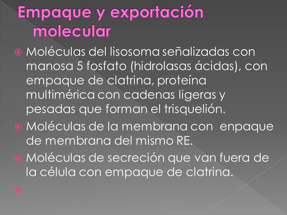 Empaque y exportación molecular