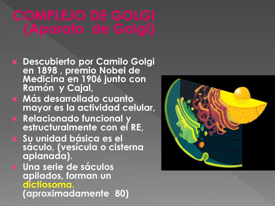 COMPLEJO DE GOLGI (Aparato de Golgi)