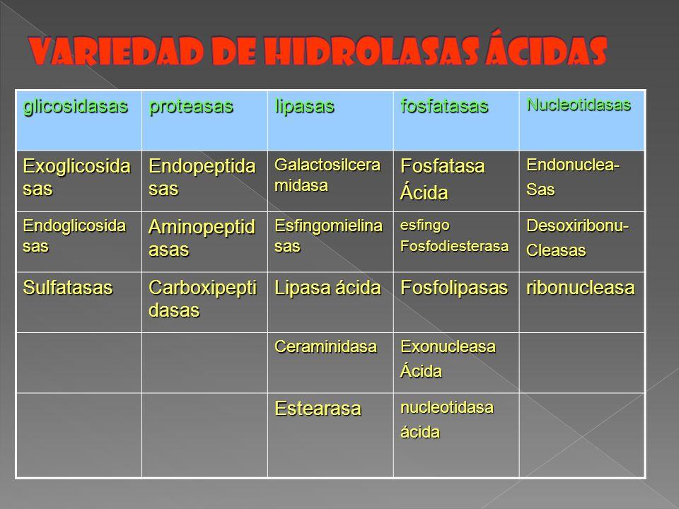 Variedad de Hidrolasas ácidas