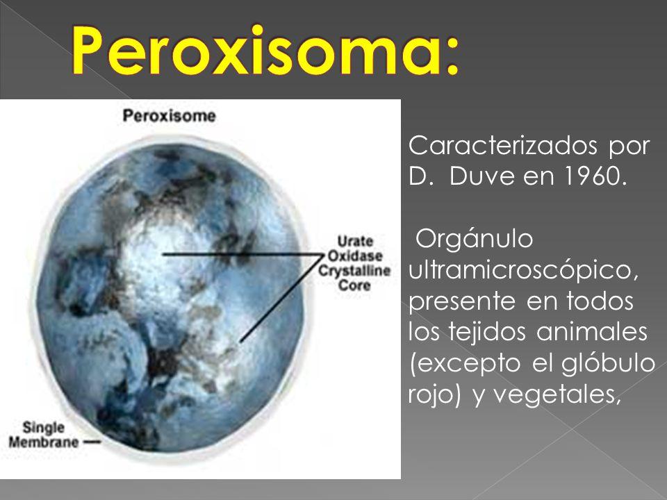 Peroxisoma: Caracterizados por D. Duve en 1960.
