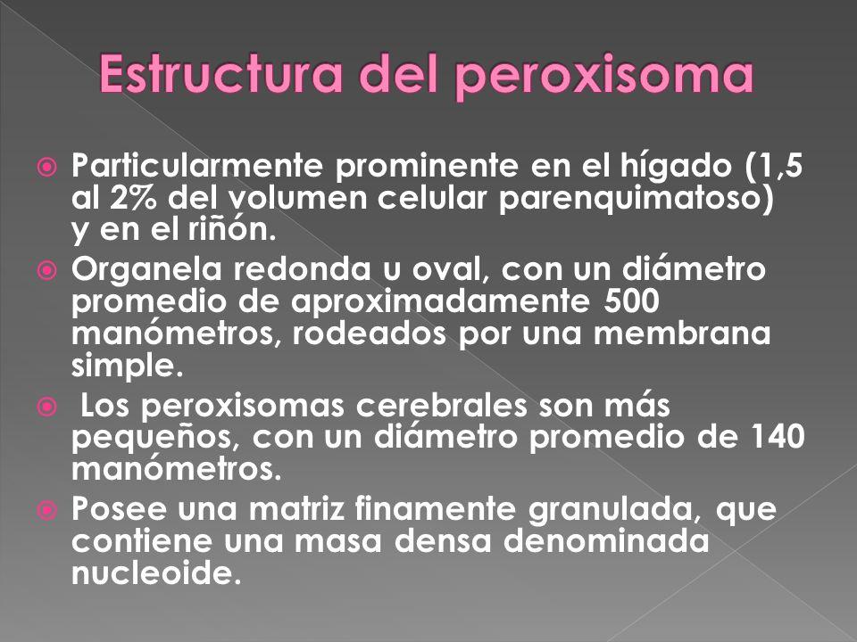 Estructura del peroxisoma