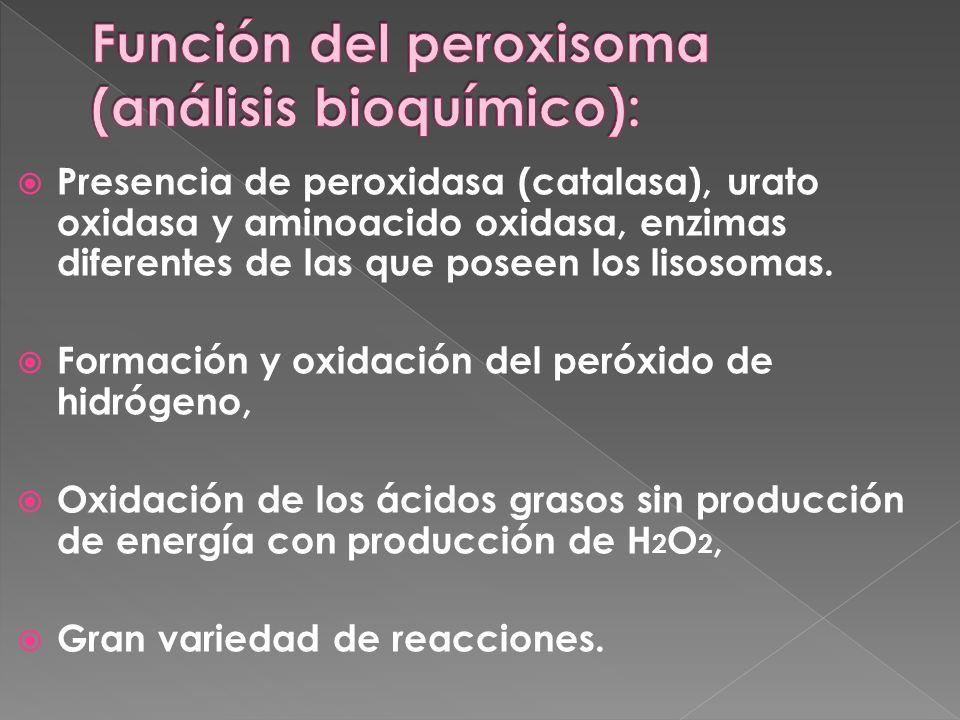 Función del peroxisoma (análisis bioquímico):