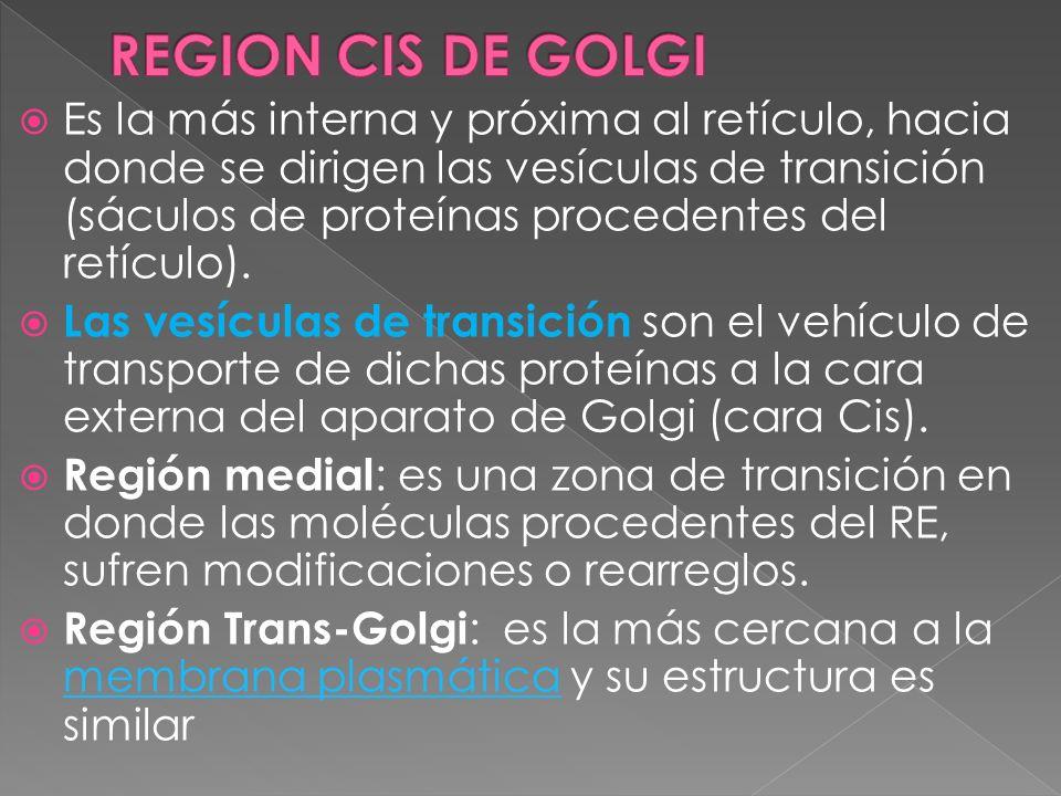 REGION CIS DE GOLGI