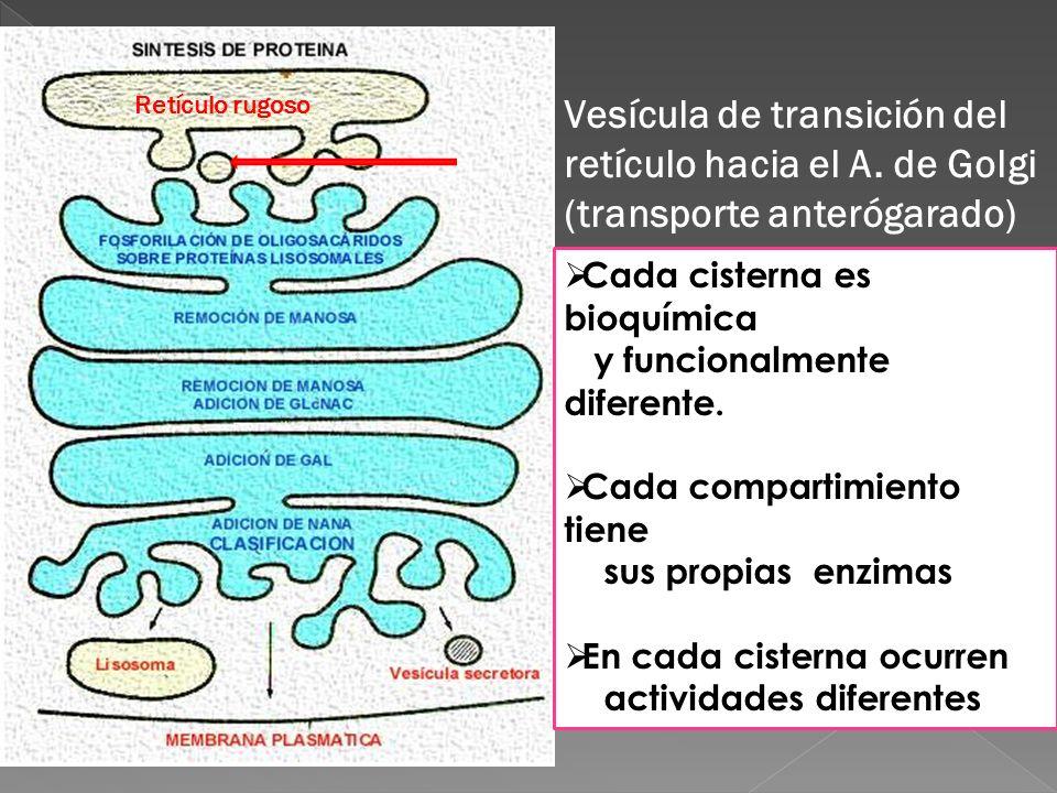 Compartimentación funcional: