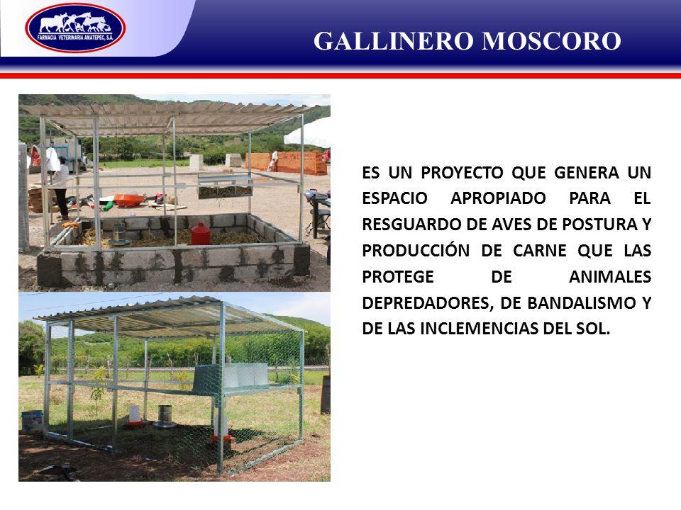 GALLINERO MOSCORO