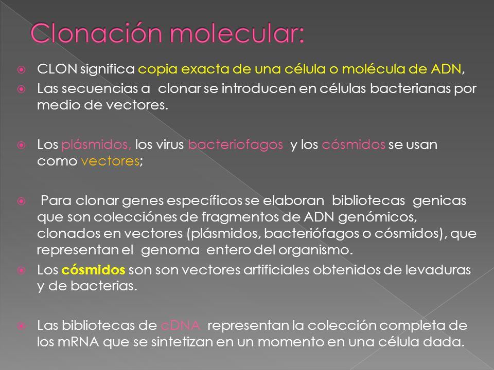 Clonación molecular: CLON significa copia exacta de una célula o molécula de ADN,