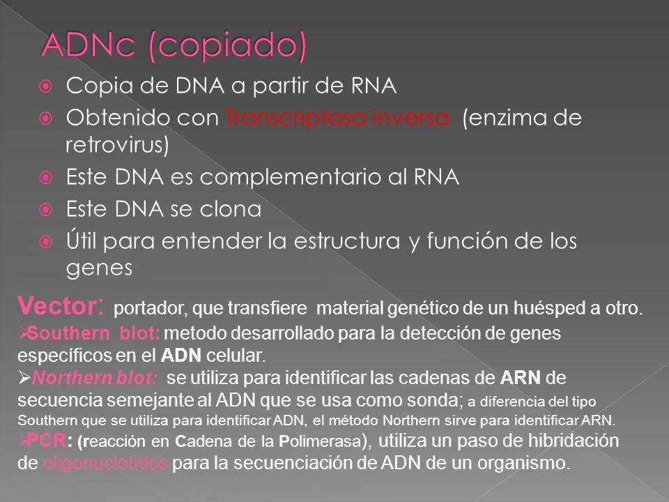 ADNc (copiado) Copia de DNA a partir de RNA. Obtenido con Transcriptasa inversa (enzima de retrovirus)