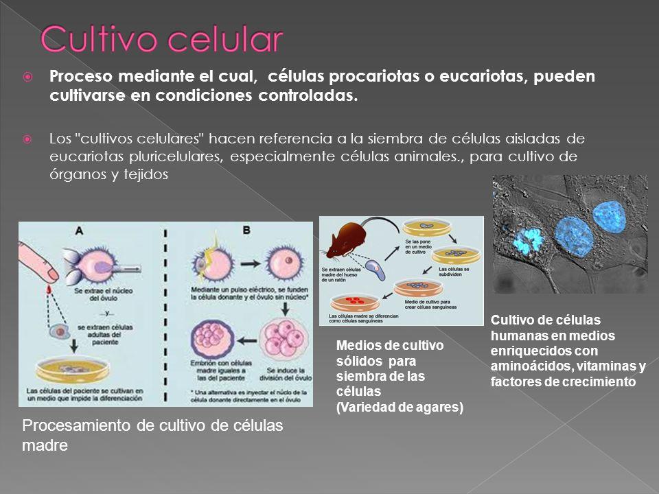 Cultivo celular Proceso mediante el cual, células procariotas o eucariotas, pueden cultivarse en condiciones controladas.