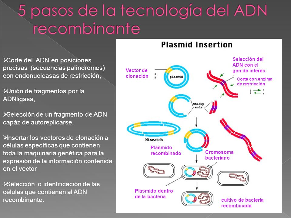 5 pasos de la tecnología del ADN recombinante