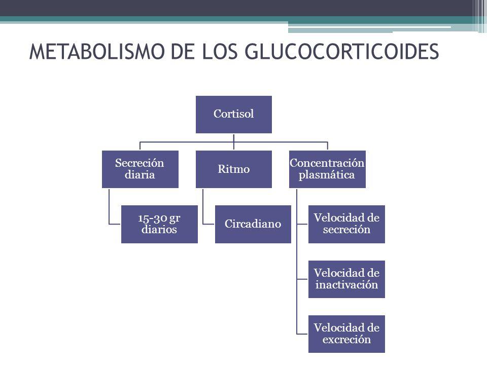 METABOLISMO DE LOS GLUCOCORTICOIDES